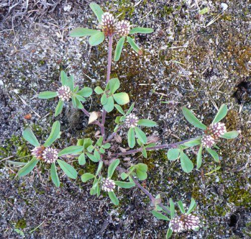 Etude de la dynamique d'espèces végétales patrimoniales (novembre 2012)