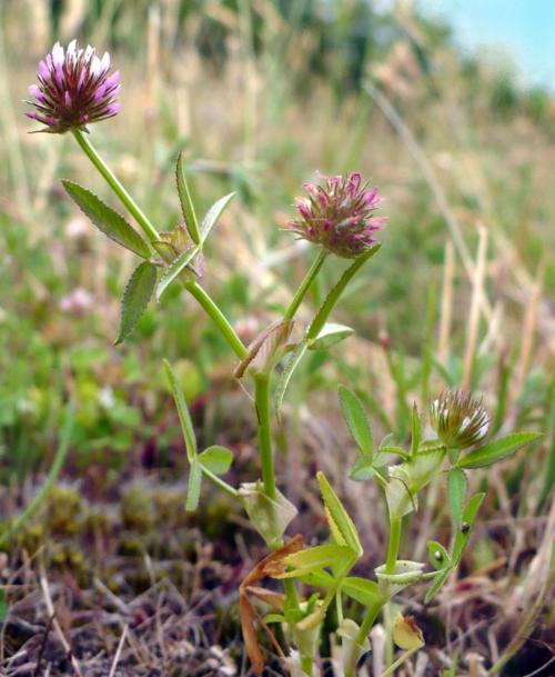 Etude de la dynamique d'espèces végétales patrimoniales (novembre 2013)